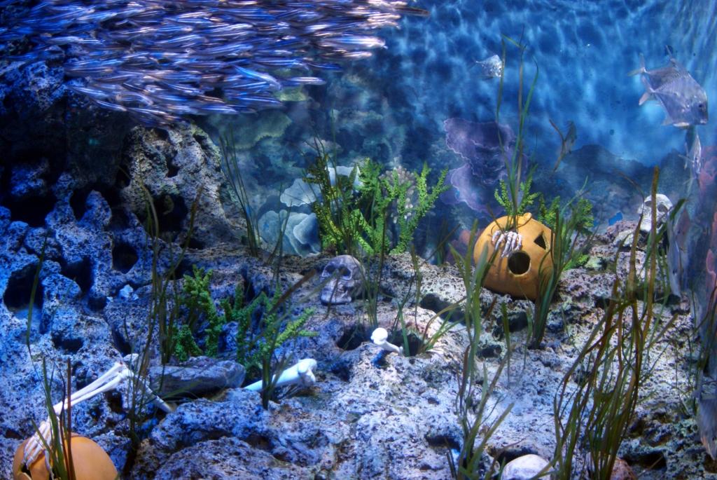 Сингапур. Океанариум на о.Сентоса в преддверии Хэллоуина