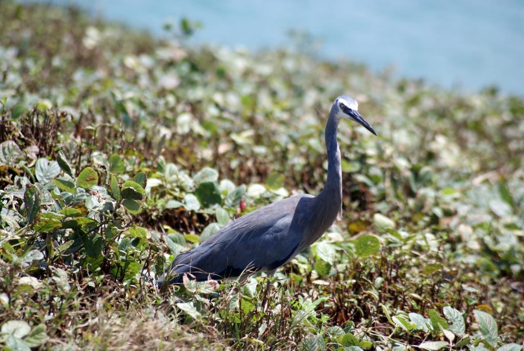 Coffs Harbour, Muttonbird Island Nature Reserve