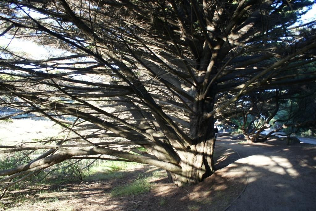 лабиринт из деревьев, Лорн (Lorne)