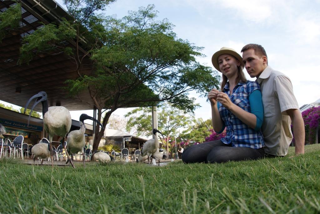 Брисбен, ибисы в South Bank Parklands
