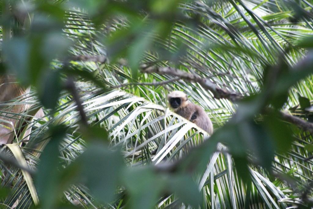 Дикая обезьянка