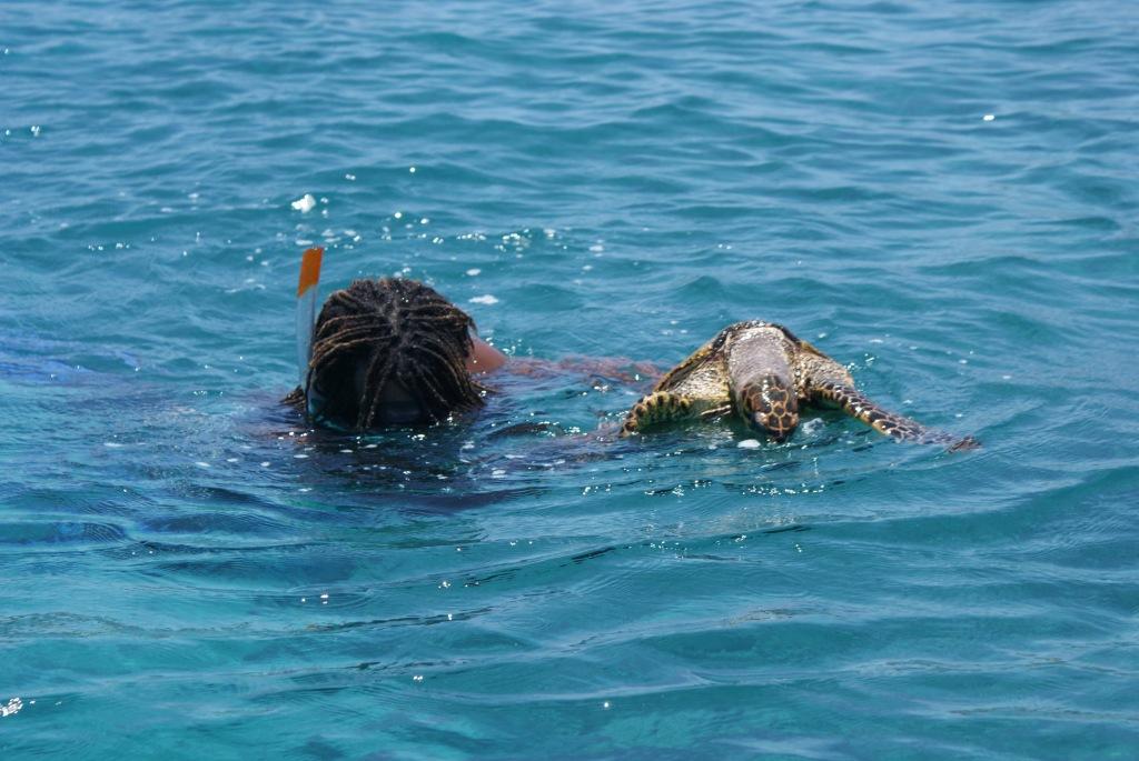 Ла Диг. Морская черепашка, осторожно подгоняемая Кэвином